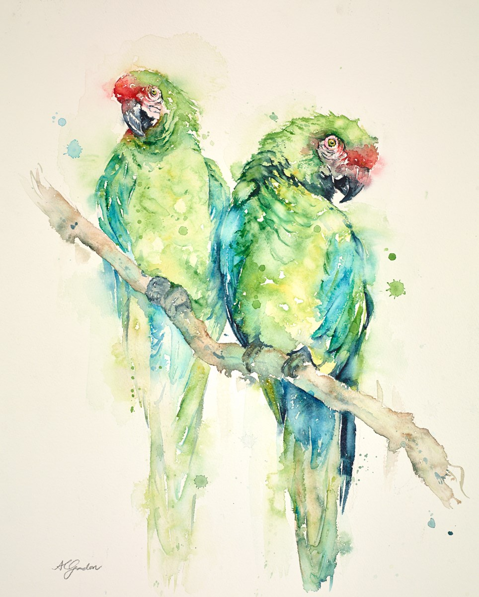 Two Great Green Macaws