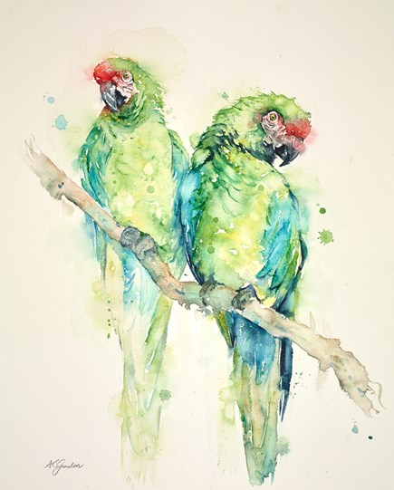 Two Great Green Macaws by Amanda Gordon - Original on Paper
